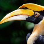 Seven years of the Hornbill Nest Adoption Program – a partnership to protect