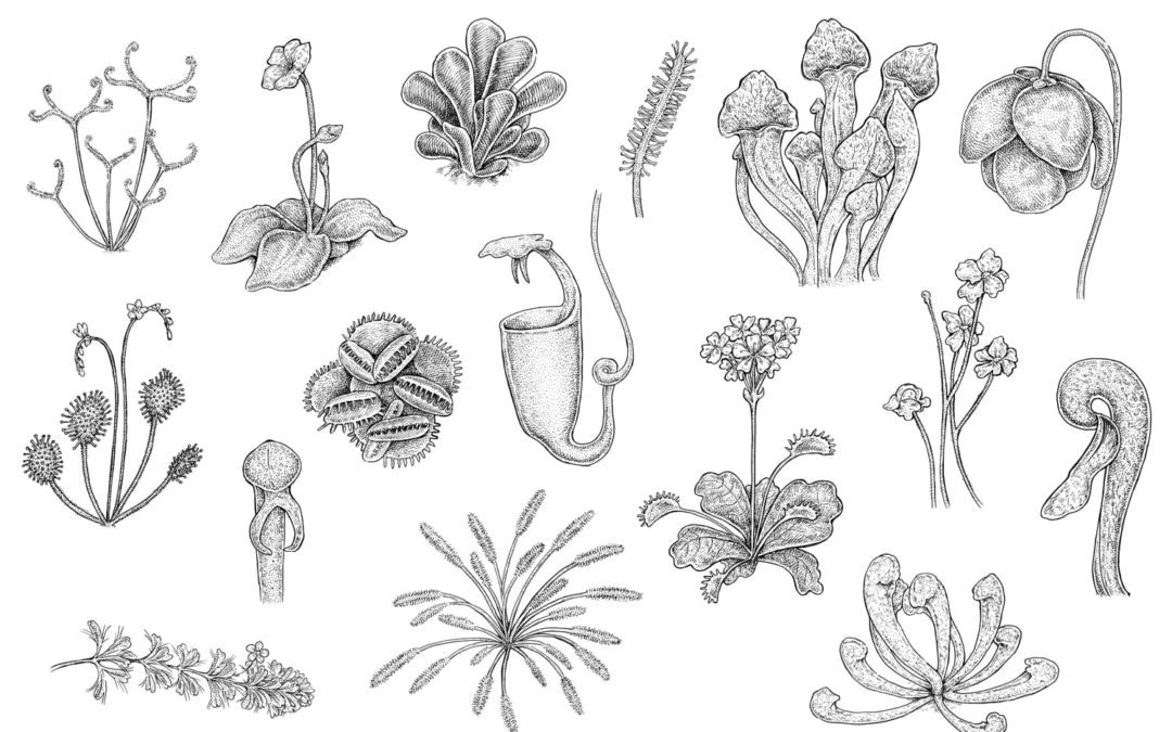 Botanical Illustration in the 21st Century